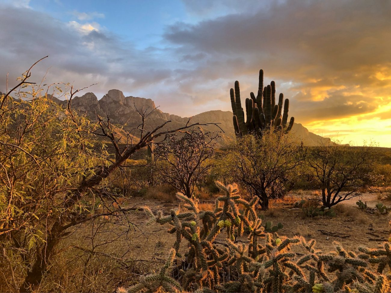 Catalina State Park at Sunset