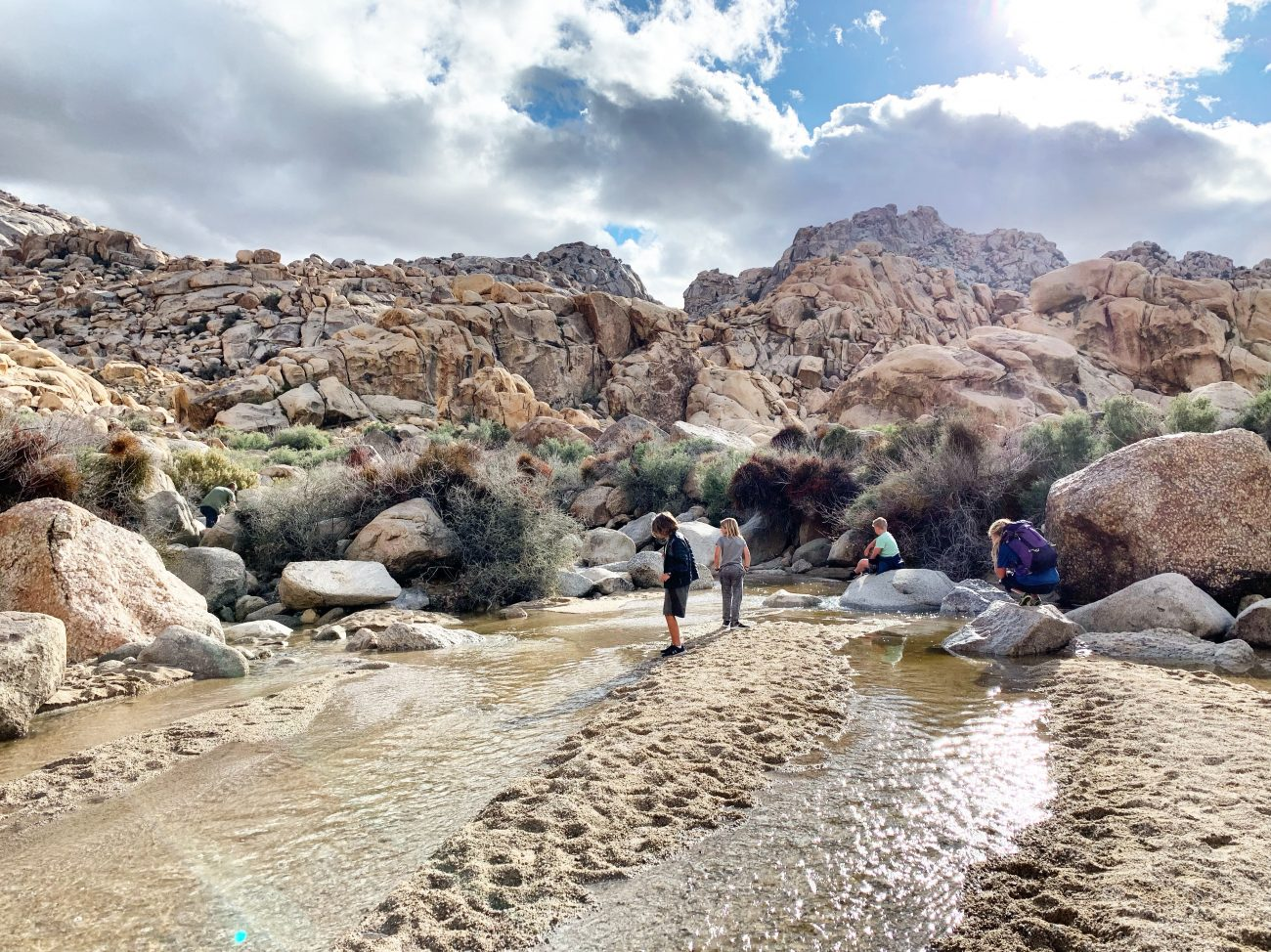 Joshua Tree Hike with Kids