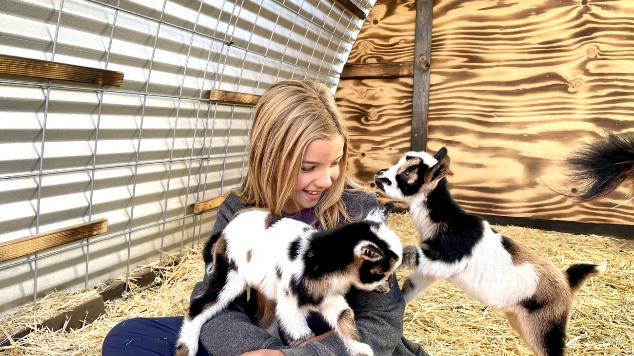 Ada with Frankie and Figgy baby goats