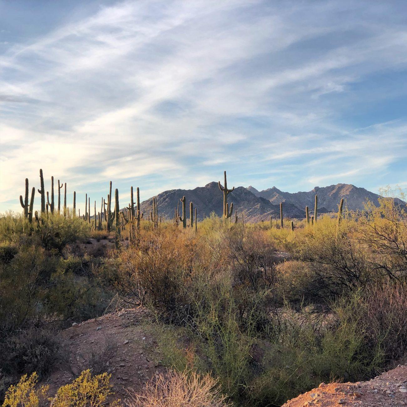 Ajo Cactus Sunset