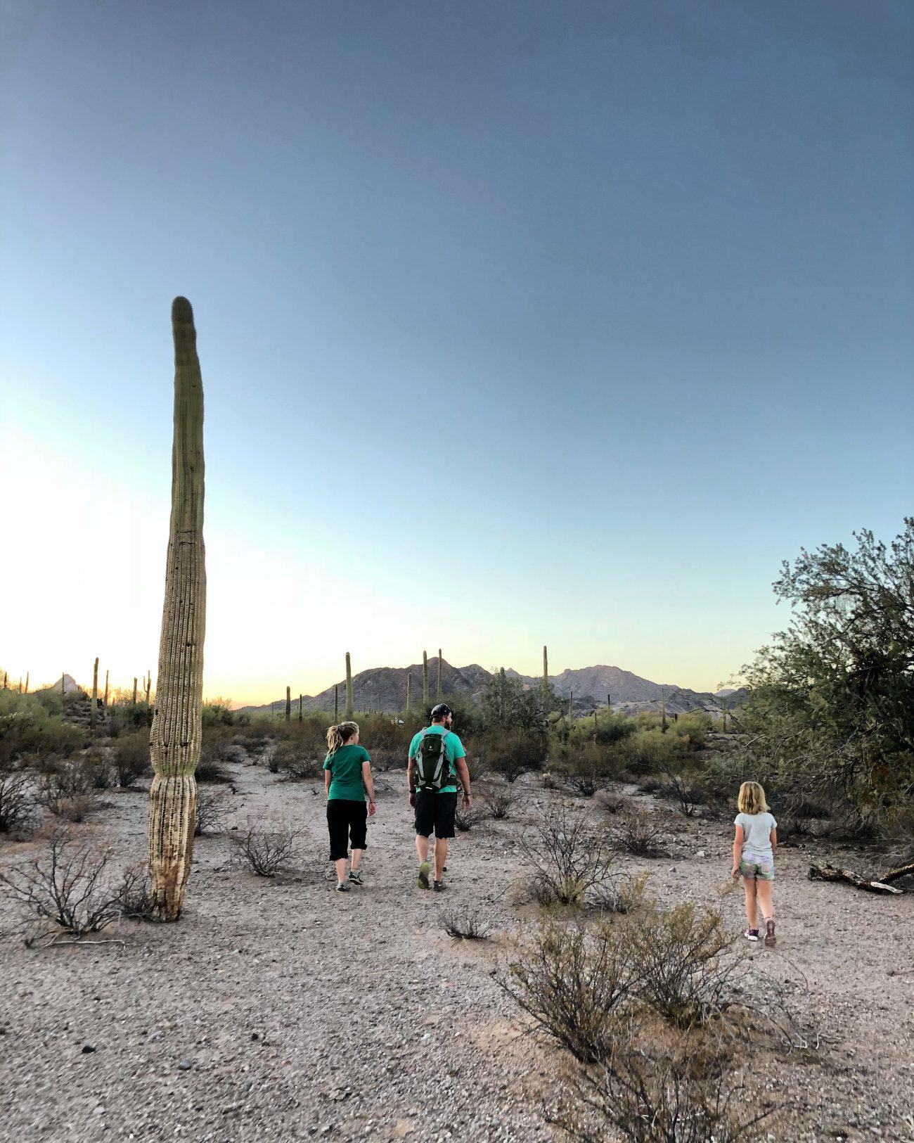 Ajo Family Cactus