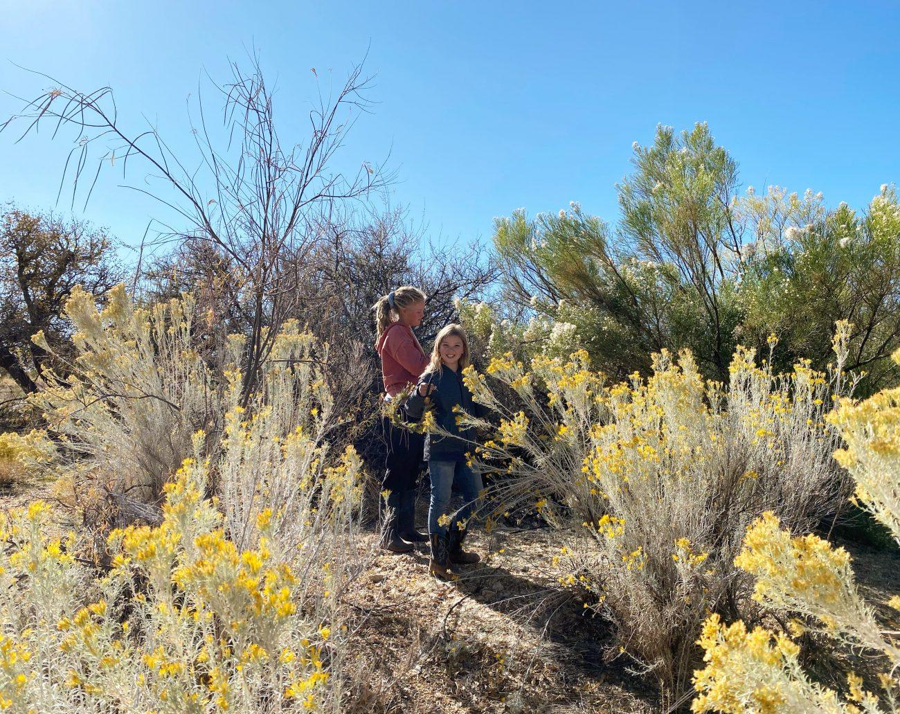 Arizona Desert Wash Plants