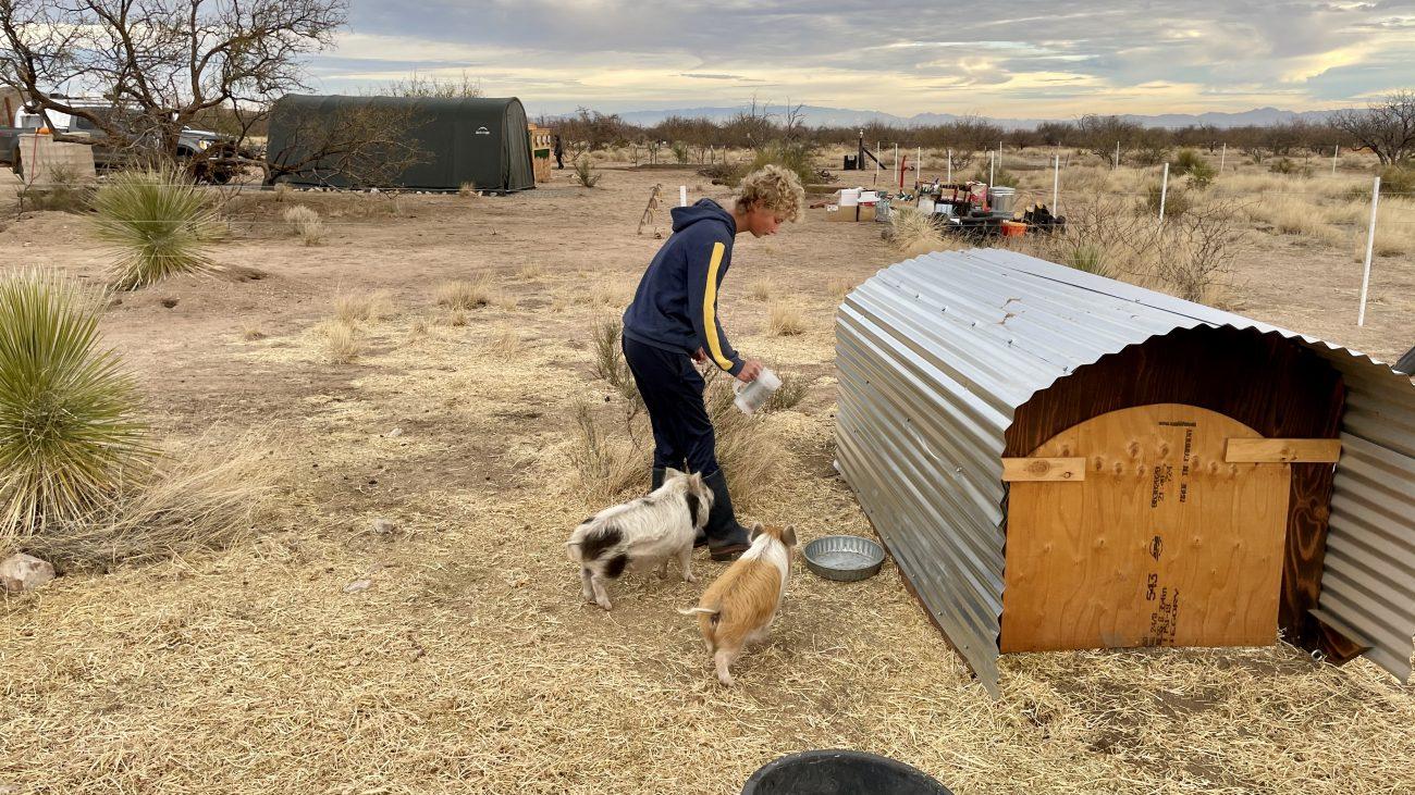 Jett feeding Kune Kune Pigs