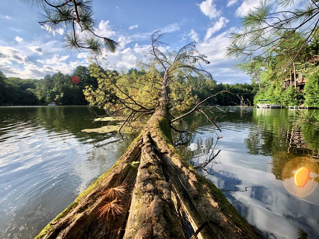Mirror Lake Tree