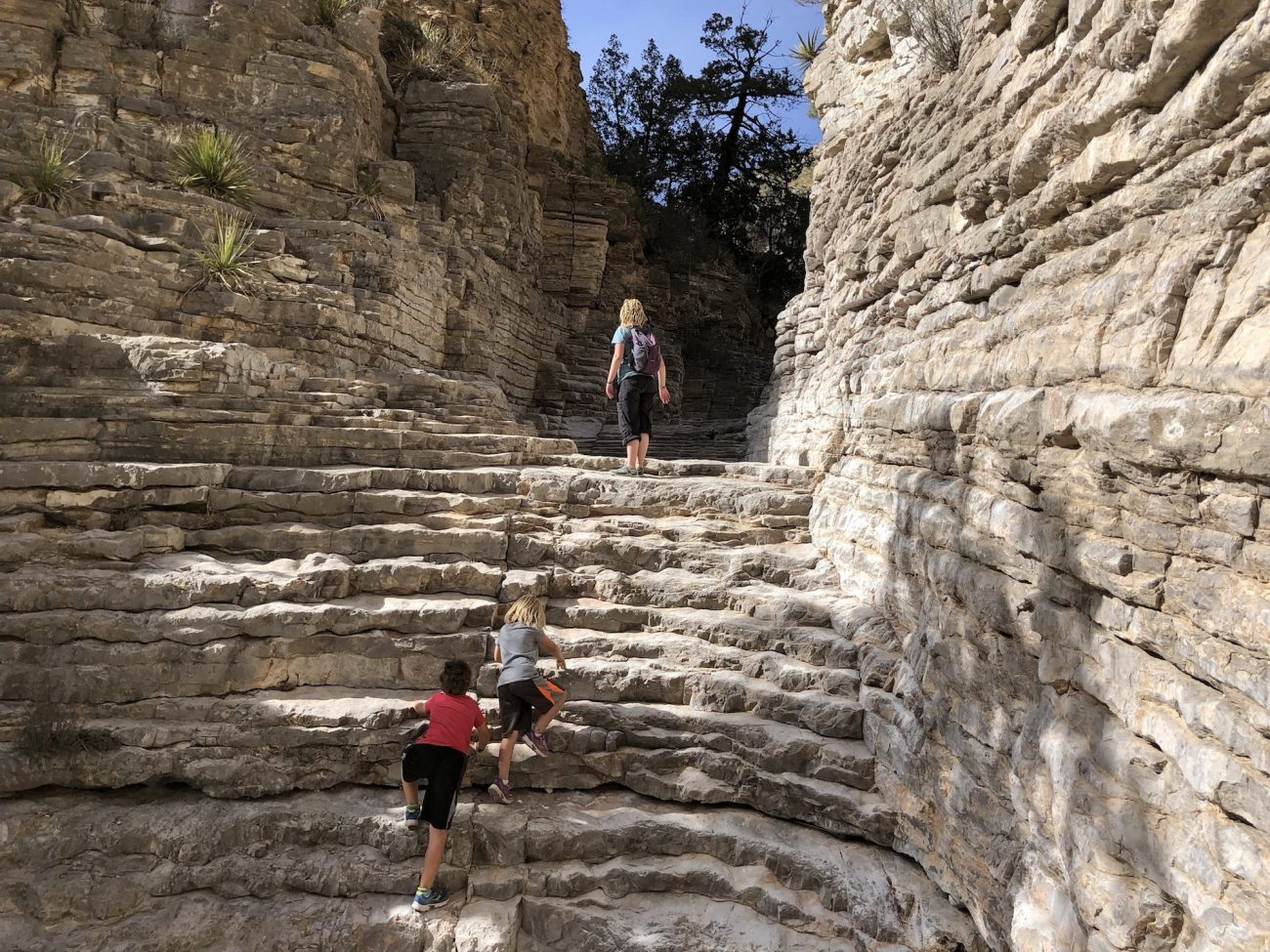 Natural Steps on the Devil's Hall Trail