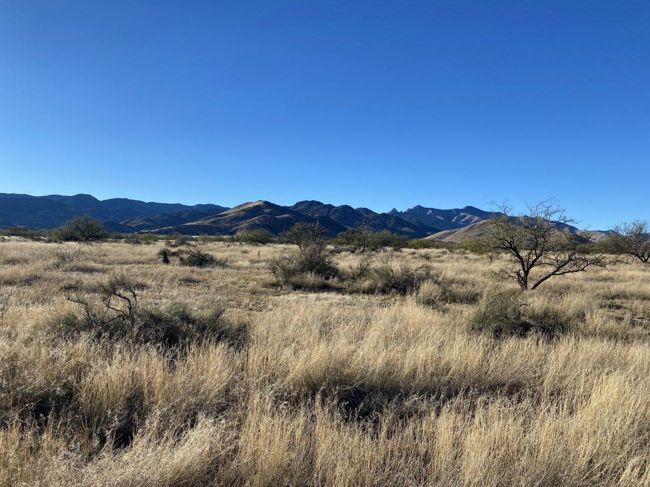 Potential Property in Arizona