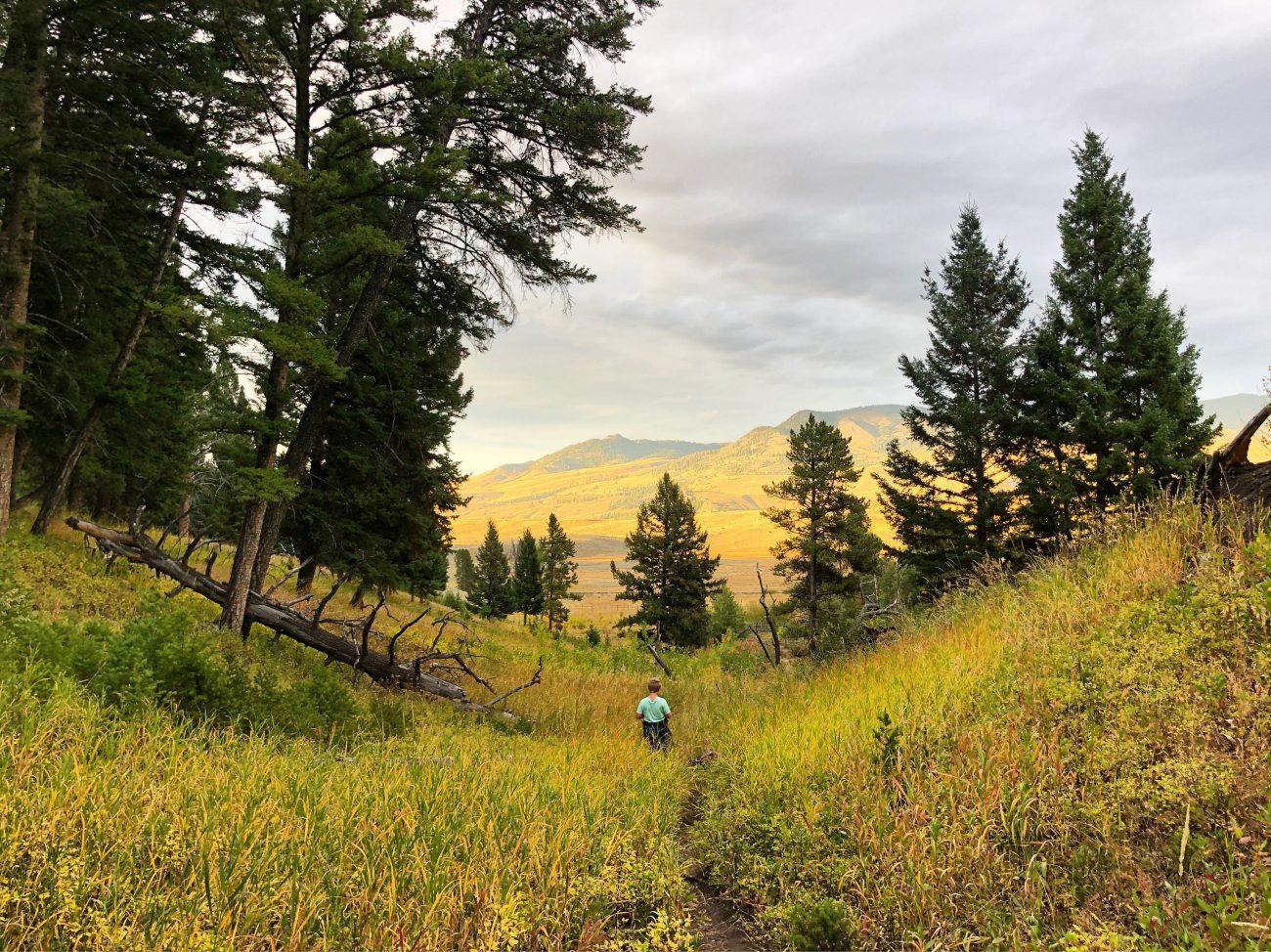 Yellowstone Jett